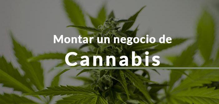 Planta marihuana para montar negocio
