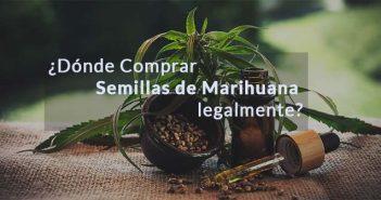 Foto portada con rotulo comprar semillas de marihuana es legal